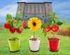 Demetra. Mostra della fragola, dei fiori e dei prodotti della nostra terra